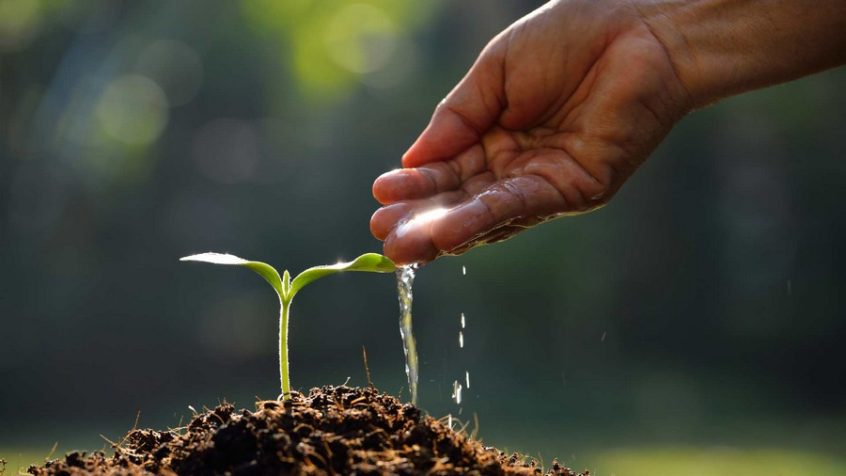 The Smallest Seed, The Smallest Deed.
